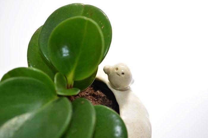 蒼雲窯さんの植木鉢