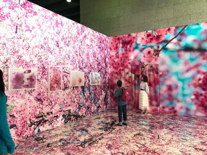 蜷川実花展「桜」